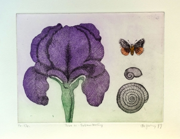 Frydl Prechtl-Zuleeg, Iris, butterfly and snail shell