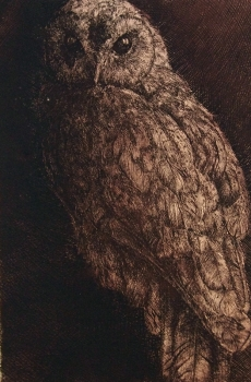 Willi Hertlein, Owl