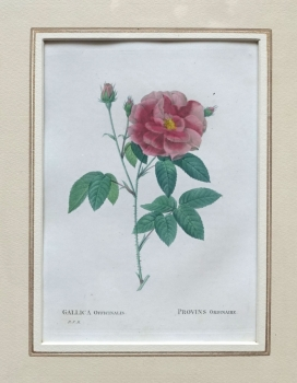Pierre-Joseph Redouté, Gallica officinalis (rose)