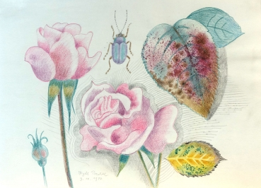 Frydl Prechtl-Zuleeg, Rose with leaves and rose beetle