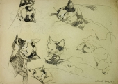 Andreas Bach, cat sketches for children's book illustration